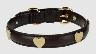 De hond en de Moschino halsband