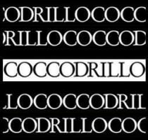 Coccodrillo for ladies
