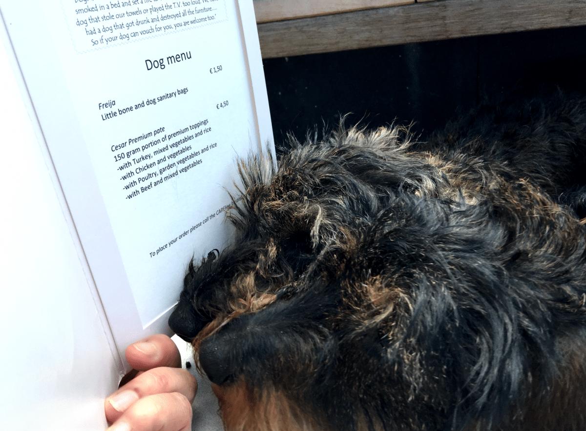 Hondenleven bij SkyLounge DoubleTree