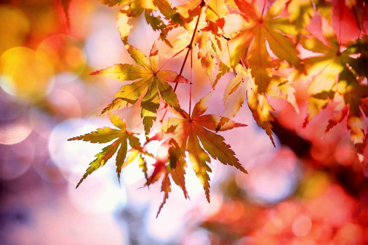 7x Waarom de herfst zo leuk is