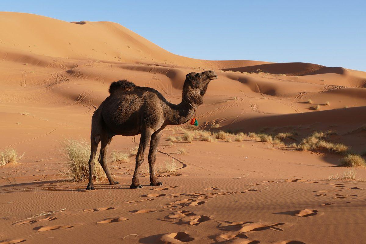 De mooiste hotspots in Marrakech