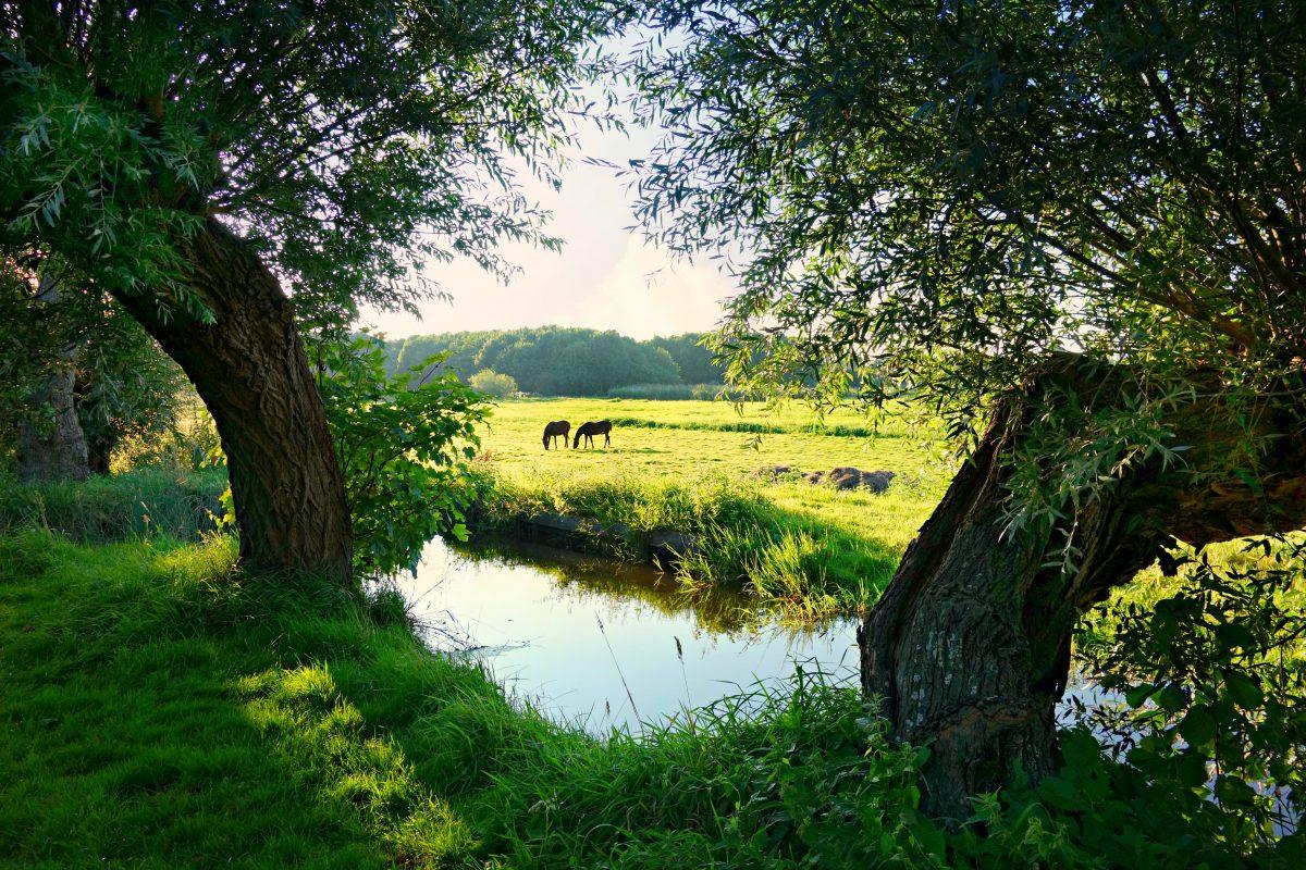 Ontdek de meest bijzondere campings in Nederland