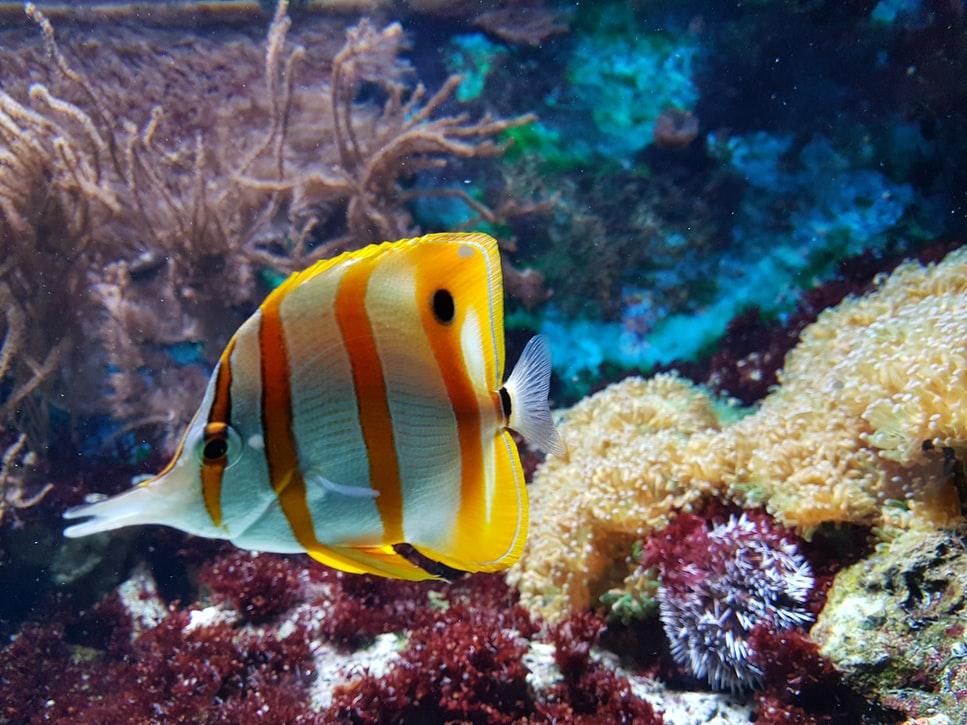Voor een educatieve en plezierige dag breng je een bezoekje aan het Palma Aquarium
